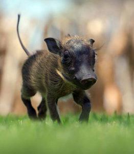 dysfunctional guru warthog past life